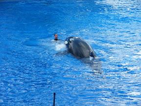 095 - Espectáculo de las orcas.JPG