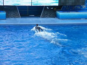 096 - Espectáculo de las orcas.JPG