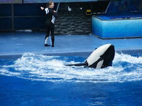 107 - Espectáculo de las orcas.JPG