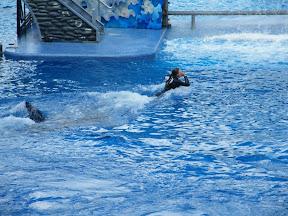 109 - Espectáculo de las orcas.JPG