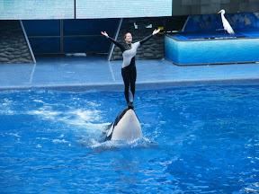110 - Espectáculo de las orcas.JPG