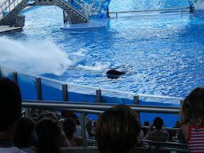 113 - Espectáculo de las orcas.JPG