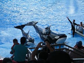 125 - Espectáculo de las orcas.JPG