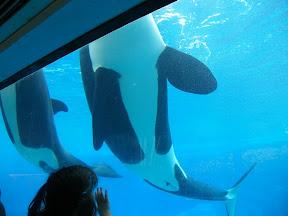 130 - Orcas.JPG