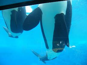 131 - Orcas.JPG
