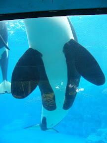 133 - Orcas.JPG