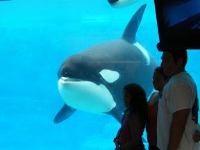 137 - Orcas.JPG