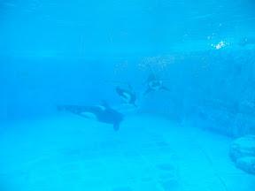 142 - Orcas.JPG
