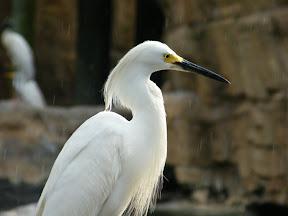 212 - Un pájaro.JPG