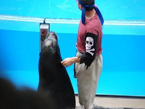 180 - Espectáculo de los leones marinos.JPG