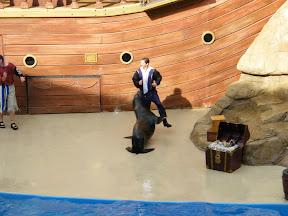 208 - Espectáculo de los leones marinos.JPG