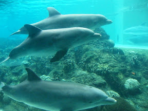 Dolphin Cove Underwater Viewing
