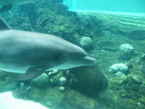 272 - Delfines.JPG