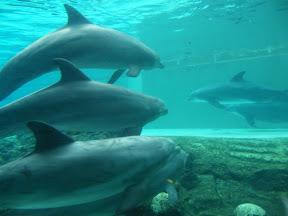 274 - Delfines.JPG