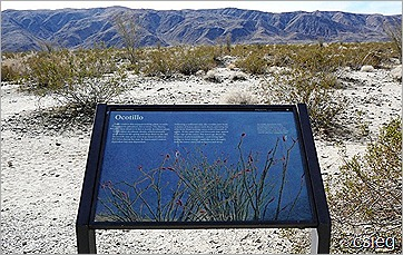 Joshua Tree National Park Trip  (13)