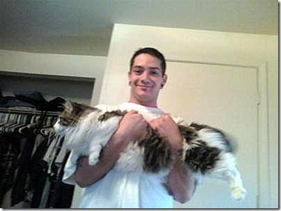 mr Jinx maine coon cat