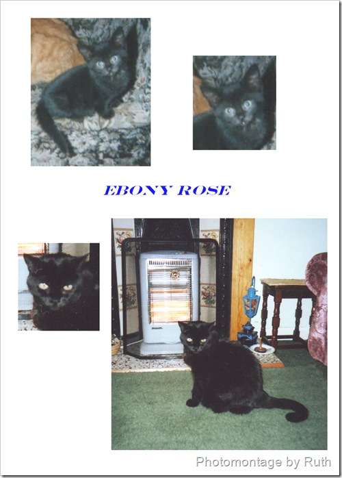 ebony rose a domestic cat