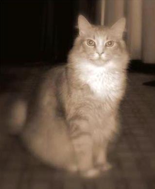Mister a 16 lb cat