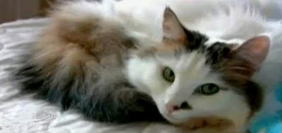 Peebles Susan Boyle's Cat