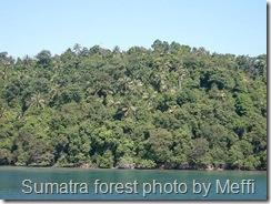 sumatra-forest