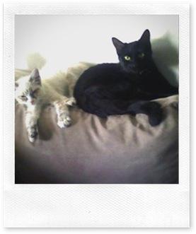 moggie-cat-2