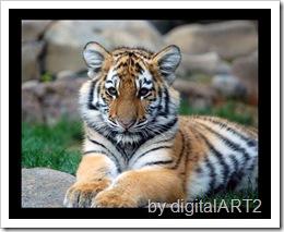 tiger cub by digitalART2