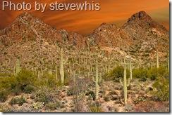 landscape outside tuscon arizona