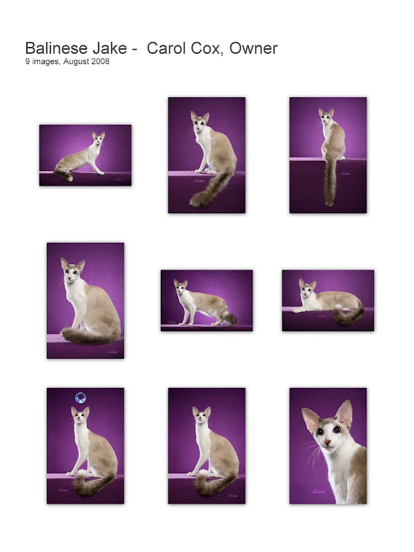 Balinese Cat collage JAKE