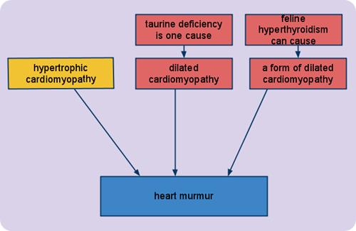 feline heart murmur causes