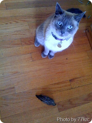 Cat Eats a Bird | PoC