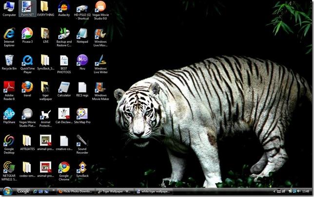 white tiger wallpaper 2