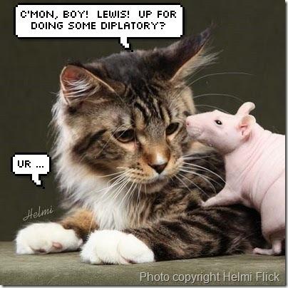 cat-and-rat1
