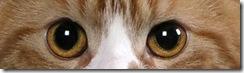 Copper orange cat eyes