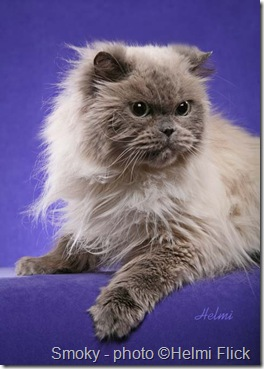 Geriatric cat Smoky