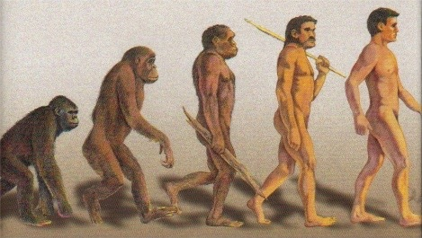 Humans Evolved From Apes