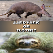 Aardvark or Sloth!?
