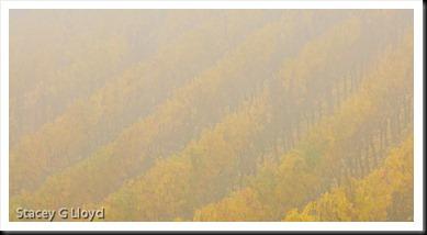 Blog_20101112_1-3