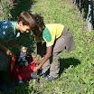 SA_Vendemmia_2010_08.jpg