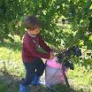 SA_Vendemmia_2010_09.jpg