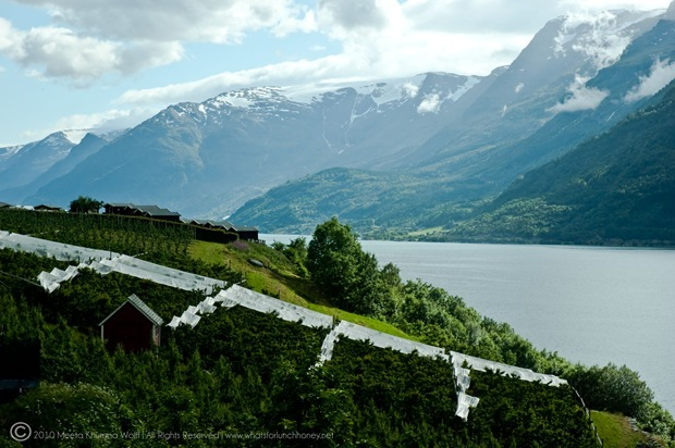 Norway_0157-CR