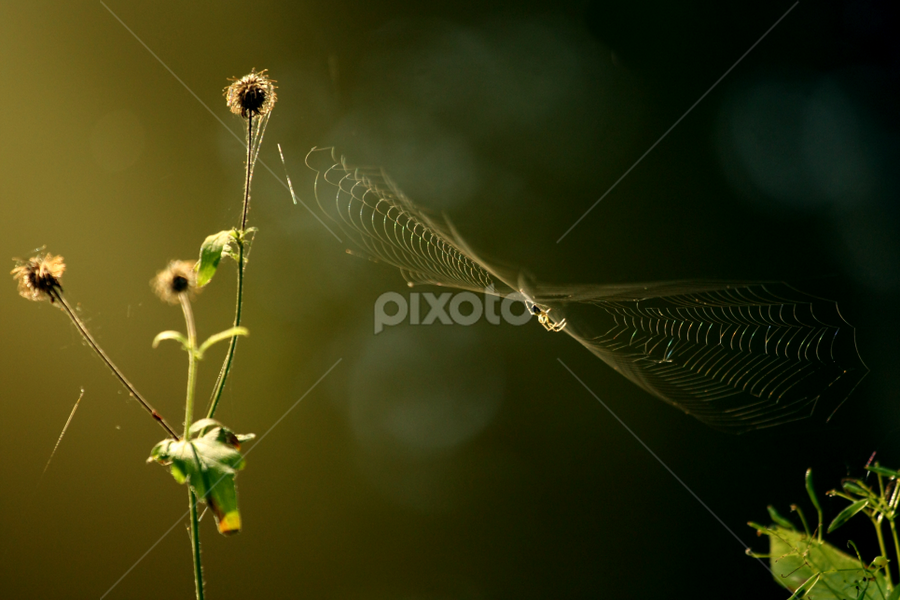 by Irena Brozova - Nature Up Close Webs ( spiderweb, web )