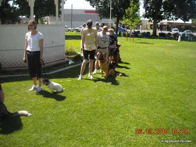 training dogs with remote collars