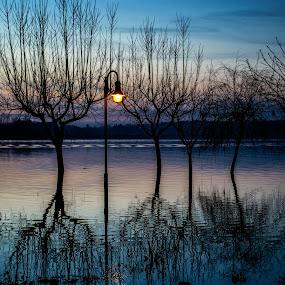 Reflexos by José Sobral - Landscapes Waterscapes ( fermentelos, pateira, 2014, josé sobral )