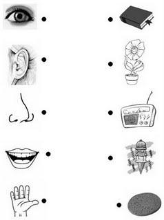 Dibujos De Los Sentidos
