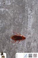 Screenshot of cucaracha