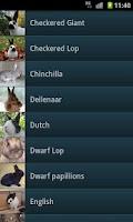 Screenshot of Rabbits