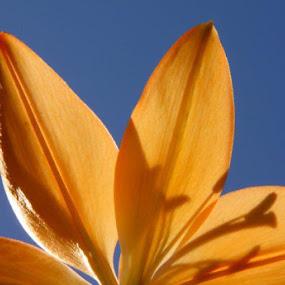 by Angela Wescovich - Flowers Single Flower (  )