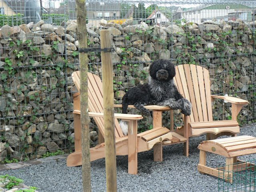 Hond Vriendelijke Tuin : Het hondenforum u bekijk onderwerp hondvriendelijk tuin