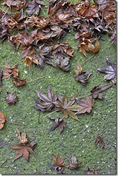 101212_moss-on-concrete-walkway