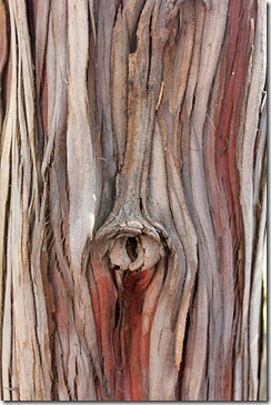 bark_SantaCruzIsland_Ironwood1